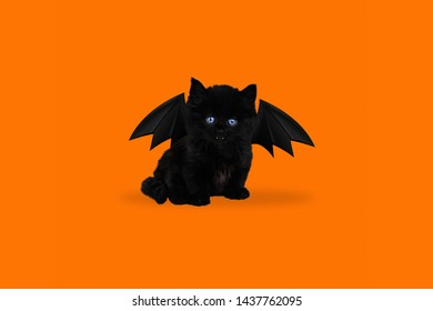 Contemporary art collage: Halloween Kitten