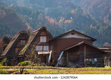 Contemporary Japanese house and traditional Wada houses during autumn season in Shirakawa go, a UNESCO world heritage site in Gifu prefecture, Japan