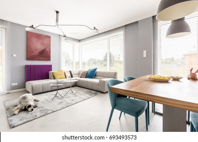 Contemporary living room for family with gray walls, beige corner sofa, big windows, painting, purple radiator and blue chairs in dining area