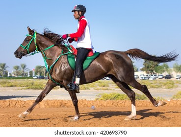 Contestants of an 80km desert endurance race push the limits of both the rider and the horse. Dubai, United Arab Emirates - 19/DEC/2014