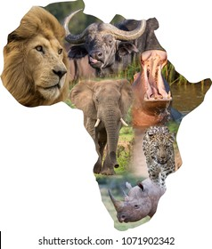 The continent of Africa filled with a collage of large wild african animals