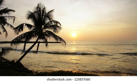 The contour palm tree at sunset on an ocean coast in yellow colors.
