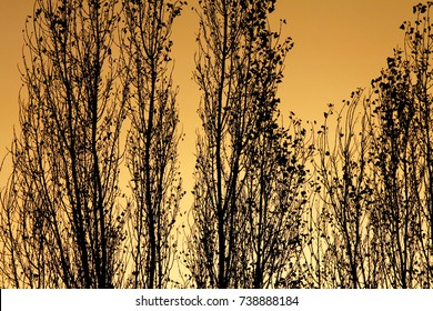 Contours of trees at sunset