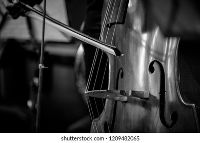 A contrabass in a great light