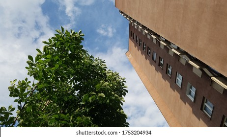 Contrast between nature and architecture - a tall red apartment building competing with a chestnut tree in summer daylight.