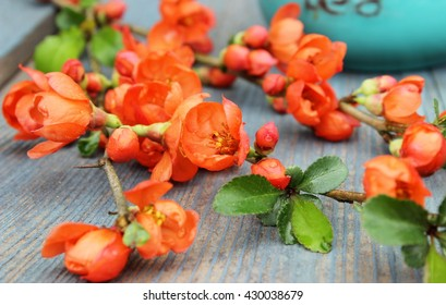 Contrast color: blue rustic wooden background and a branch with bright orange flowers.