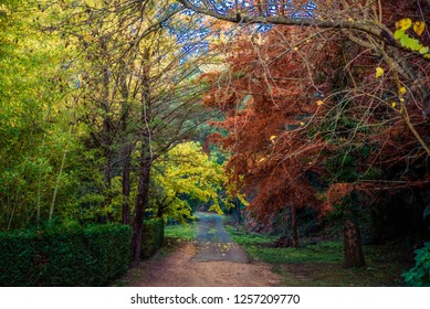 contrast of the trees of a forest in the month of autumn