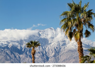 the contrast of winter in California. warm palm trees in the valley and snow in the high mountains