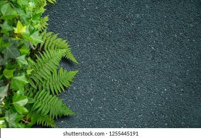 Contrasting background with black asphalt and lush vegetation