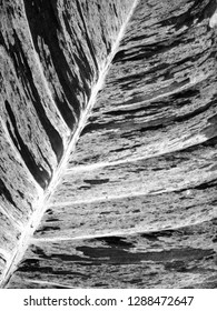 Contrasting Black and White Variegated Leaf Texture Close Up