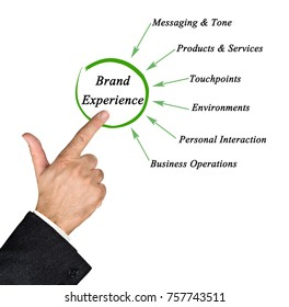 Contributors to Brand Experience
