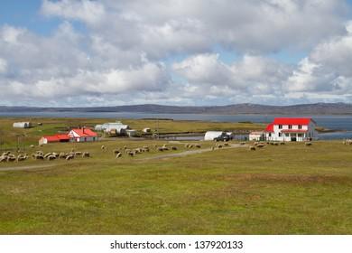 Contryside Falkland Islands