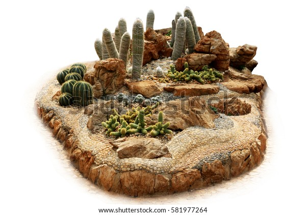 Convert cactus isolated on a white background.