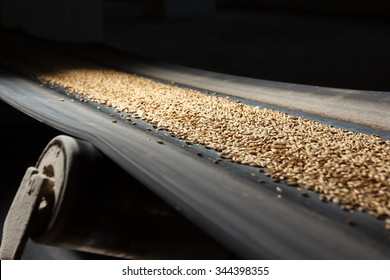 conveyor belt with barley at beer factory