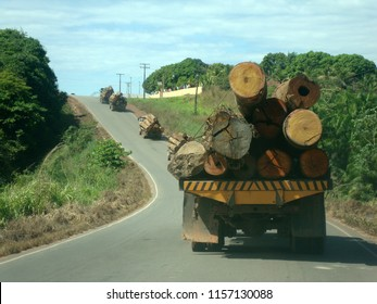 a convoy of trucks transporting tree logs extracted from an area of Brazilian Amazonian forest.