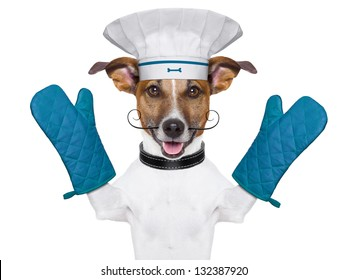 a cook chef dog with oven mitts