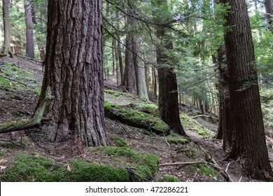 Cook Forest State Park Pennsylvania. One of the largest old growth forest in the eastern United States.