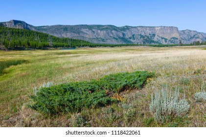 Cooke City, Montana, USA - The prairie with a glimpse of the Yellowstone river flanked by woodland, and the Rockies in summer near Cooke City, Montana, USA.