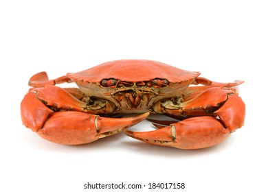 Cooked Blue Crab Isolated on White