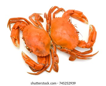 Cooked Crab Isolated on white background