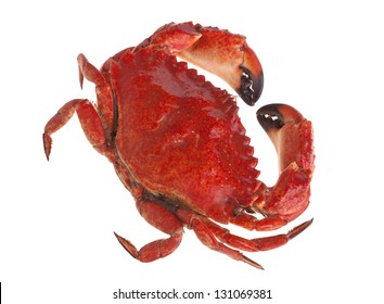 Cooked crab on white background
