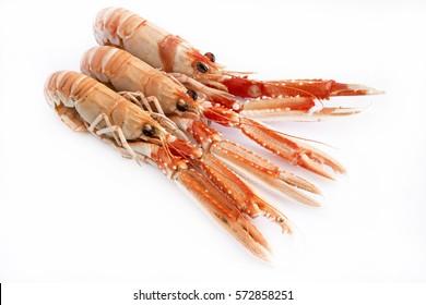 Cooked crawfish on white background