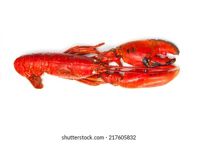 Cooked European common lobster isolated on a white studio background.