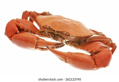 Cooked Mud crab on white background