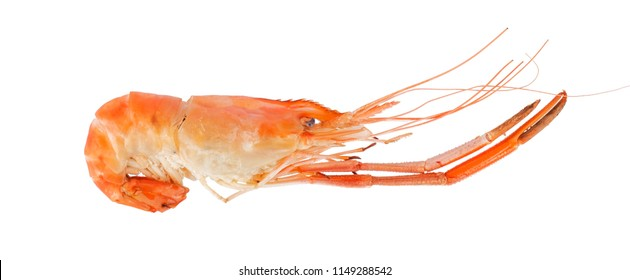 cooked prawn or river shrimp isolated on white background. Top view.