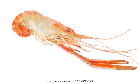 cooked prawn or river shrimp isolated on white background.