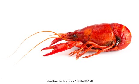 Cooked Red Crawfish Isolated on a White Background