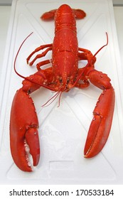 Cooked seafood orange lobster with big claws