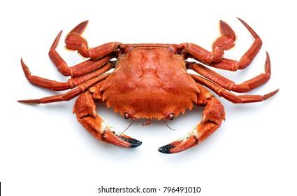 cooked spanish necora,atlantic crab isolated