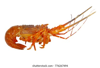 Cooked spiny lobster isolated
