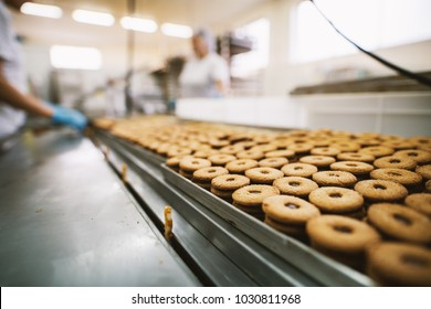 Cookie factory, food industry. Fabrication. Cookie production.