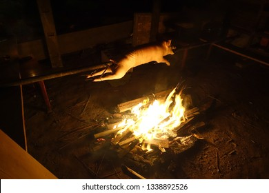 Cooking Pig Spit Roasting Over Fire - Siargao, Philippines