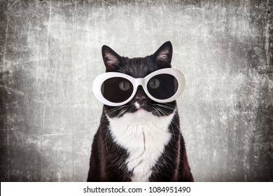 Cool Black and White Tuxedo cat in White retro sunglasses