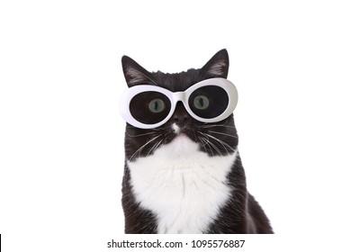 Cool Black and White Tuxedo cat in White retro sunglasses