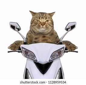The cool cat is riding a motorcycle. White background.