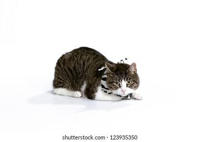 A cool cat wearing a stylish bandana on a white background.