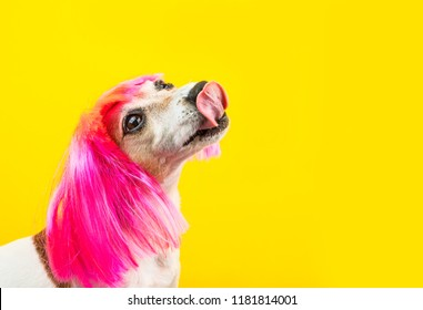 Cool crazy licking happy dog in pink wig. Fashion dog food. Yellow background. Bright colors