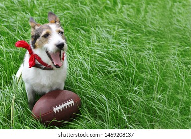 Cool funny dog is playing, dog with ball for american football. A happy dog lies on the grass with a rugby ball. Jack Russell Terrier with a toy. Copy-space.