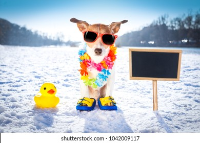 cool funny freezing icy dog in snow with sunglasses and flower chain , waiting for the summer to come very soon, banner to the side