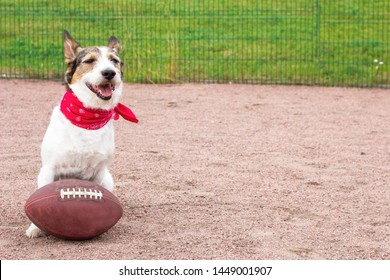 cool funny happy dog is playing football, dog with an american football ball