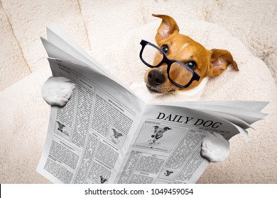 cool funny jack russell  dog reading a newspaper or magazine wearing reading glasses