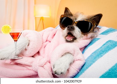 cool funny  poodle dog resting and relaxing in   spa wellness salon center ,wearing a  pink bathrobe and fancy sunglasses, with martini cocktail