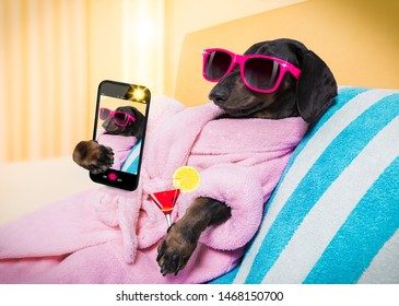 cool funny  sausage  dachshund dog resting and relaxing in   spa wellness salon center ,wearing a  pink bathrobe and fancy sunglasses, with martini cocktail, taking a selfie with smartphone
