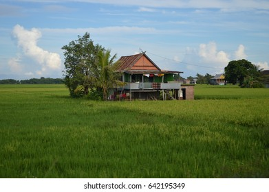 Cool house in the middle of rice fields