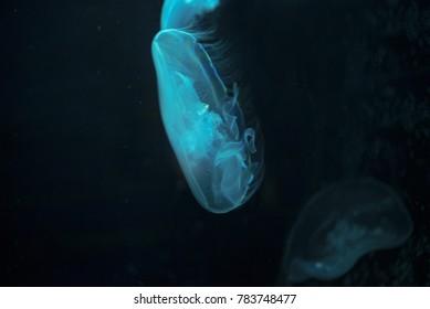 Cool Jellyfish Wallpaper