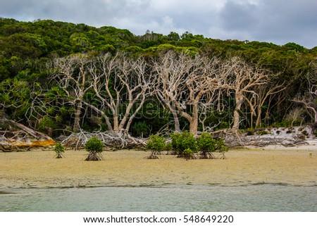 Cool Looking Trees And Plants In Australiau0027s Whitsundays Island /  Whitsunday Nature / Whitsundays Island,
